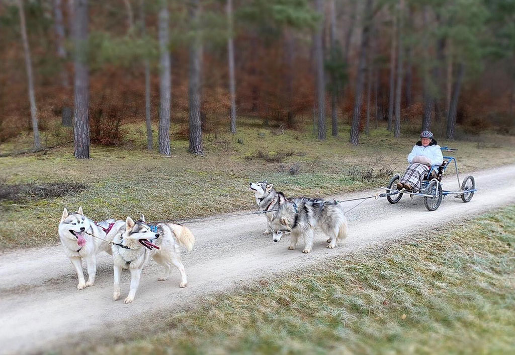 Hundeschlitten6-1024x707px.jpg