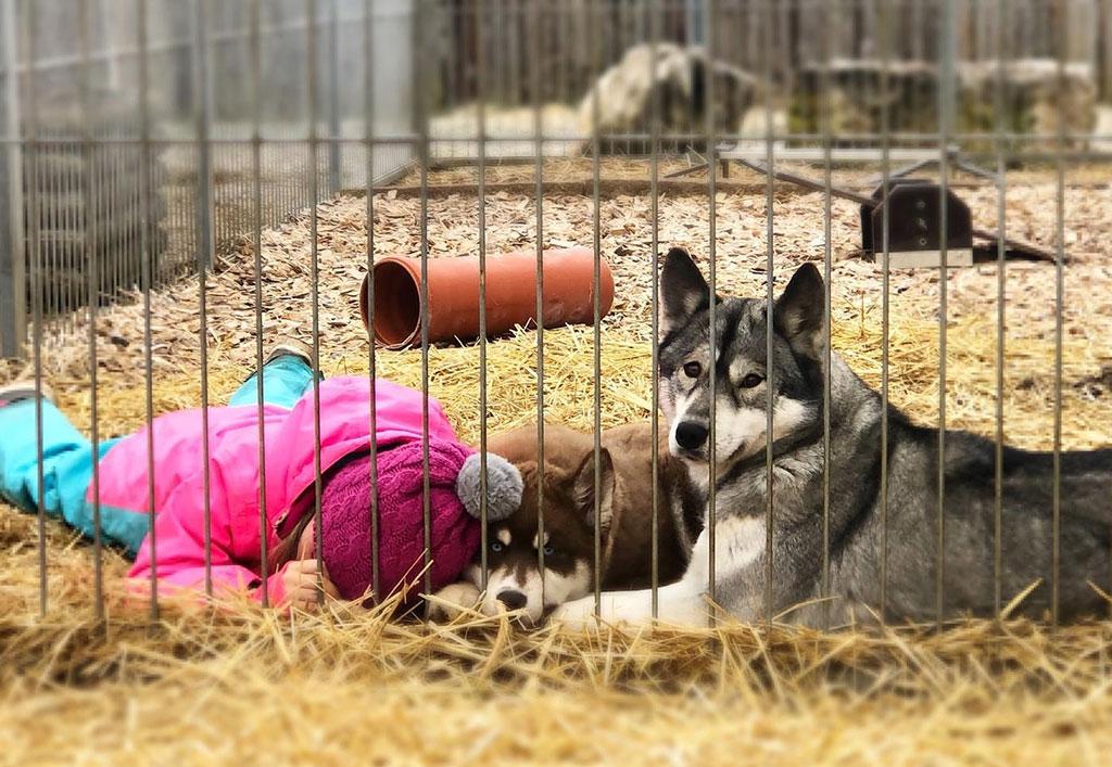Hundeschlitten1-1024x707px.jpg