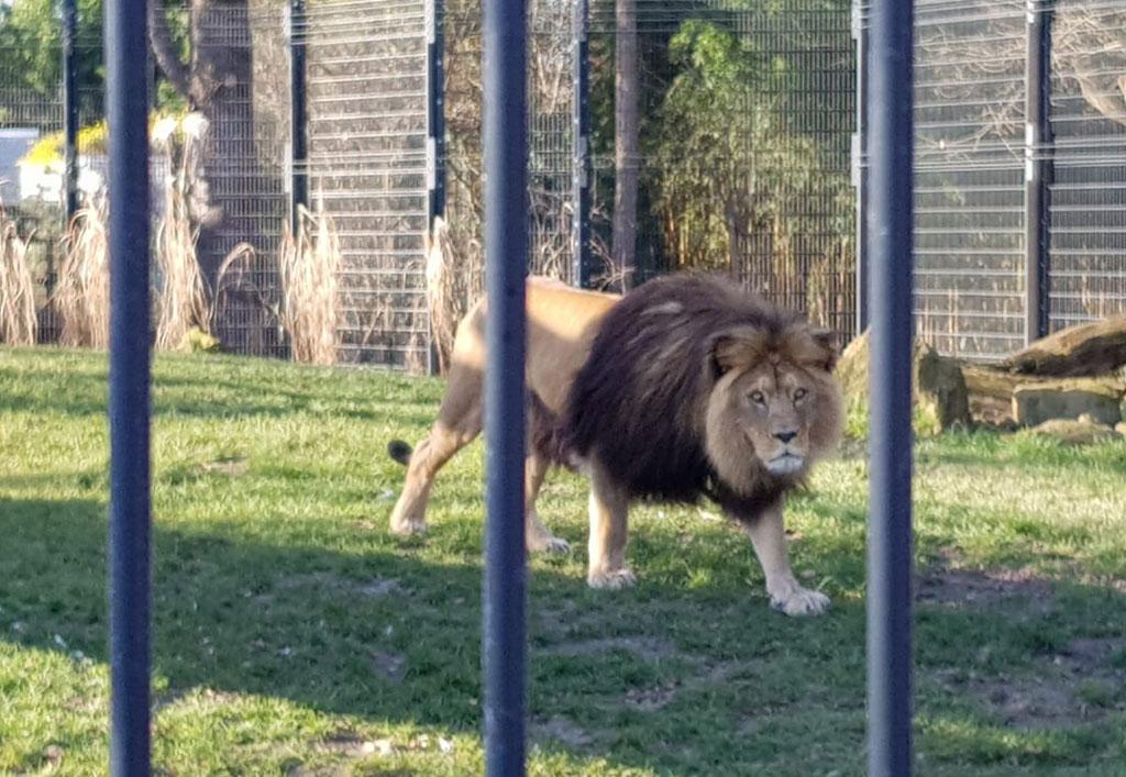 Zoo1-1024x707px.jpg