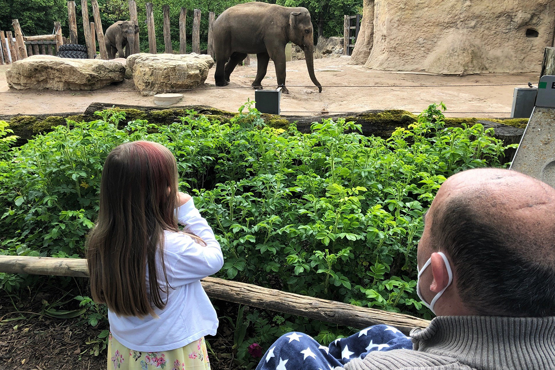 Elefant_1170_781.jpg